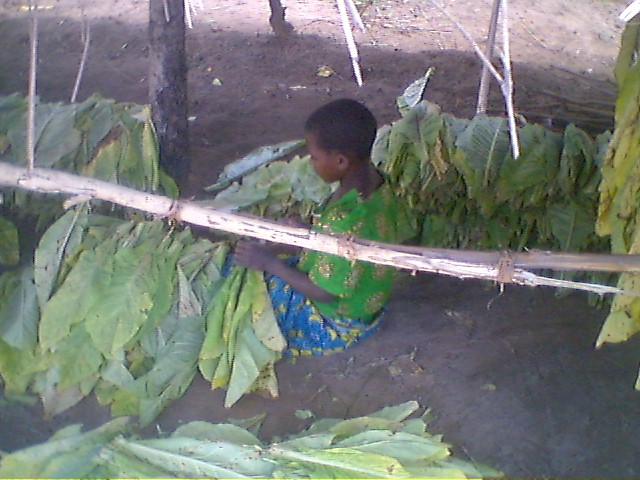 Cote D'Ivoire and Ghana child labour